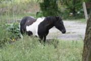 Thumbnail horse pic