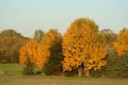 Thumbnail autumn trees