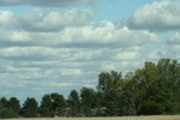 Thumbnail trees and clouds